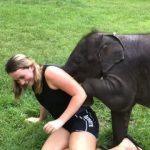 Une touriste est envahie de câlins d'éléphanteau, mais elle ne semble pas trop embarrassée