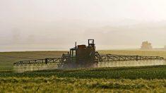 Glyphosate: Monsanto aurait créé des groupes de faux agriculteurs