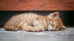 Bretagne: des associations sauvent 300 chats de l'euthanasie