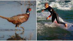 Bretagne: deux surfeurs se font tirer dessus par des chasseurs qui les prenaient pour des faisans!