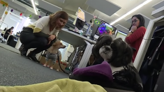 Lyon : une entreprise permet à ses employés d'aller au bureau avec leur animal de compagnie - zoothérapie gratuite pour tout le monde!