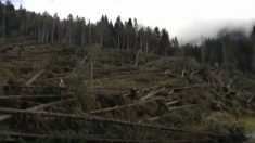 Vidéo: une tempête, qui a littéralement rasé une forêt en Italie, fait des victimes et abîme gravement une cathédrale inondée
