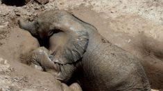 Des villageois du peuple Massaï sauvent un éléphanteau