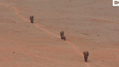 Les éléphants boivent à cause d'une fuite de tuyau d'eau