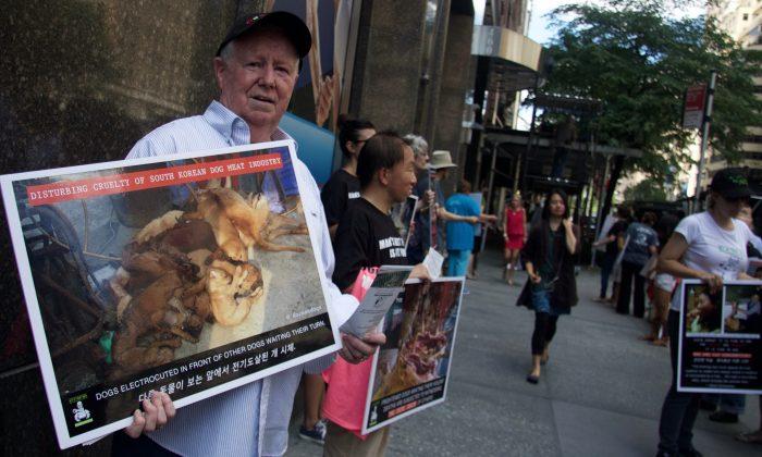 La Corée du Sud ferme le plus grand abattoir de viande canine du pays