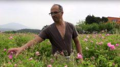 Grasse : la Ville libère des surfaces constructibles pour en faire des champs de plantes à parfum