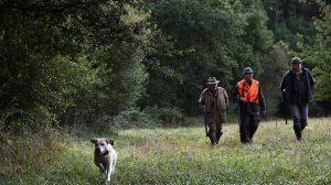 LIMOGES – Un chasseur de 88 ans a été agressé par 3 individus lors d'une battue au sanglier