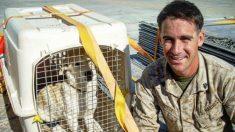 Un chien errant en Afghanistan sort du pays clandestinement grâce à un marine - ce dernier savait qu'il devait le sauver