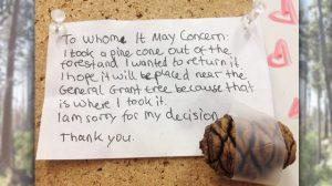Un enfant envoie une lettre d'excuses au parc national après avoir pris une pomme de pin pour l'emmener à la maison