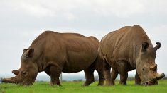 Rapport de la WWF: une baisse de 60 % de la population animale mondiale