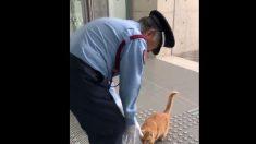 JAPON - Deux chats tentent depuis 2 ans d'entrer dans le musée d'art d'Hiroshima