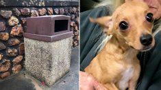 Un chien jeté à la poubelle près de l'autoroute, affamé et gelé, est sauvé et attend maintenant d'être adopté