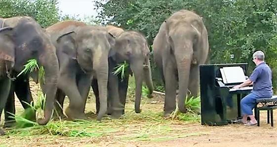 Le pianiste de musique classique Paul Barton joue pour les éléphants rescapés en Thaïlande