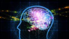 Des chercheurs avancent que le cerveau fonctionne encore après que le cœur cesse de battre : les patients seraient conscients qu'ils sont morts