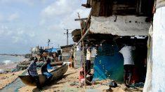 Le Liberia protège les requins pour sauver ses petits poissons