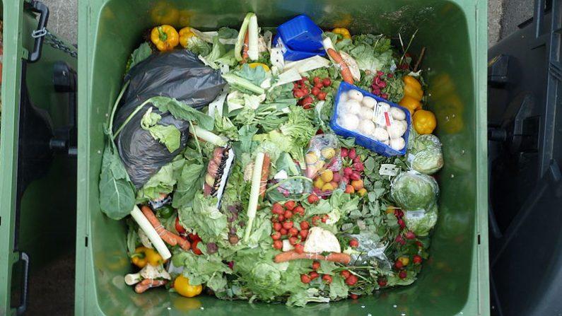 Montpellier: condamnés pour avoir récupéré de la nourriture dans la poubelle d'un supermarché, la cour d'appel finit par les relaxer