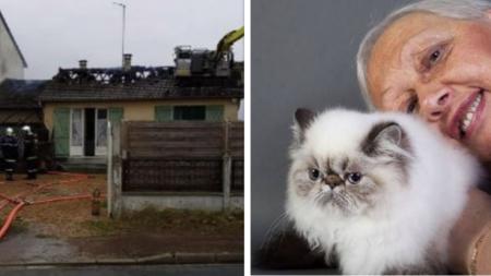 Sarthe: une sexagénaire lance un appel à l'aide pour loger ses 25 chats après l'incendie de sa maison