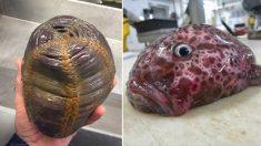 Un chalutier de haute mer photographie des poissons « extraterrestres » tirés des profondeurs de l'océan