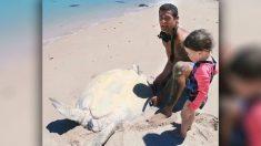 Ce papa australien sprinte à toute vitesse vers une tortue de mer échouée sur une plage et coincée sur le dos