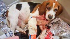 Un camionneur sauve deux chiens jetés d'une voiture en marche