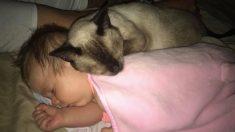Une chatte blessée et rescapée était terrorisée par tout autour d'elle jusqu'à ce qu'elle se blottisse contre un nouveau-né
