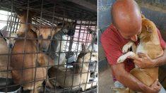 Une chienne refuse de lâcher l'homme qui l'a sauvée d'un boucher