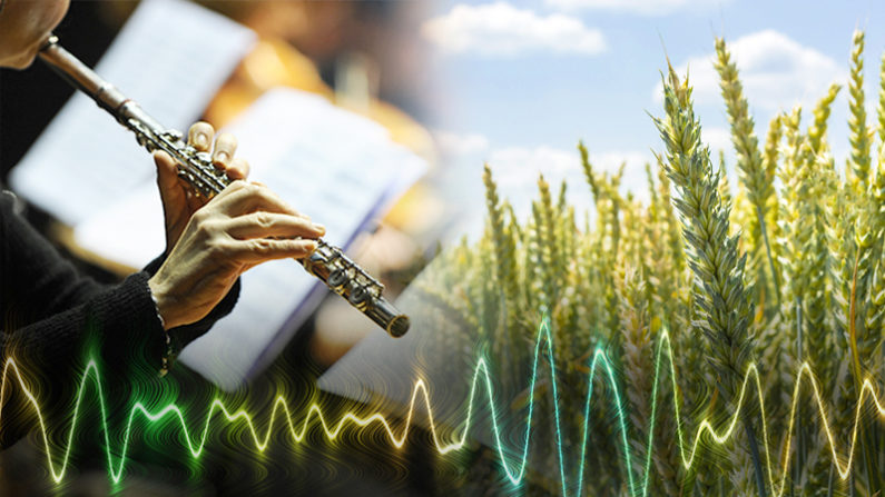 Les plantes ont un goût prononcé pour la musique classique, cependant elles détestent particulièrement le rock 'n roll