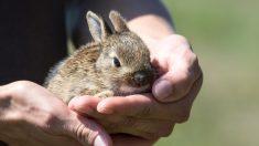 Plus de 4000 petits animaux de compagnie sauvés de l'euthanasie grâce à de nombreuses associations