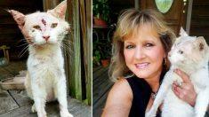 Une femme ne reconnaît pas qu'un animal maltraité est un chat jusqu'au moment où elle s'en approche