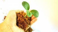 Mayenne : un agriculteur plante 1000 arbres sur sa parcelle de 32 hectares