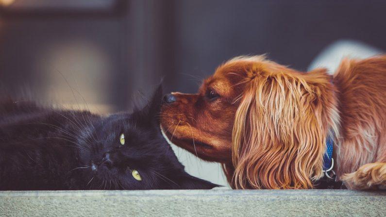 Belgique: les chiens seront reliés aux cartes d'identité des Belges à partir de 2020