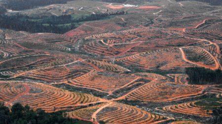 Déforestation en Indonésie: plus d'un 1,3 milliard de dollars d'amendes impayées  (Greenpeace)