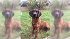 Onnie, la chienne des pompiers du Morbihan volée dimanche, a été retrouvée