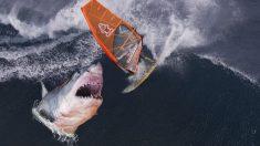 Un photographe capture des photos effrayantes à quelques centimètres des mâchoires d'un grand requin blanc