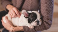 La SPA sauve 18 chiens qui vivaient dans des
