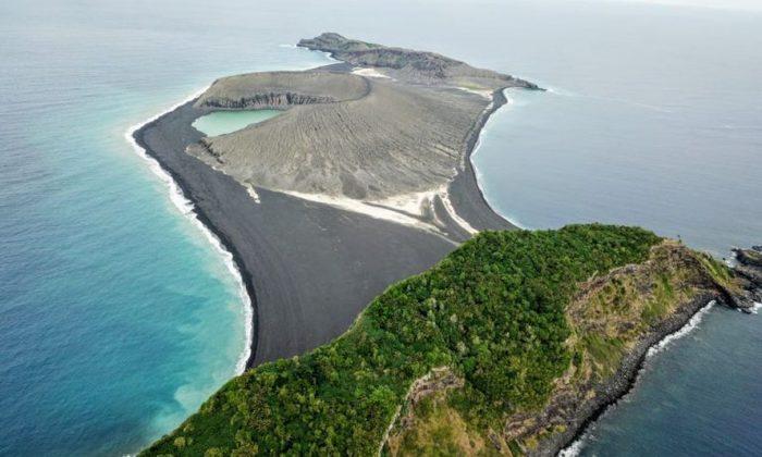 La vie est maintenant apparue sur l'île mystérieuse qui a émergé de l'océan Pacifique en 2014
