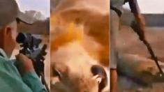 L'indignation éclate devant la séquence d'un chasseur de trophées tirant sur un lion endormi