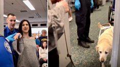 Un chien guide montre ce qu'il fait pour aider sa propriétaire à passer en douceur la porte de sécurité de l'aéroport