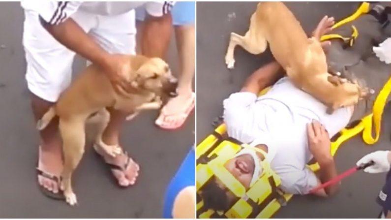 Un chien affolé refuse de quitter son propriétaire blessé