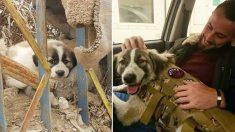 Un chien parcourt 4 800 km pour retrouver un ancien combattant de l'armée britannique qui l'a sauvé en Syrie