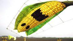 15 choses que vous devez savoir sur Monsanto
