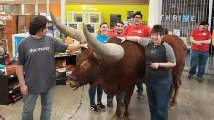 Un homme du Texas amène un taureau au magasin pour tester la stratégie de « tous les animaux domestiques sont les bienvenus »