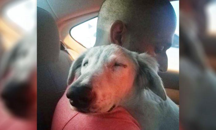 Un chien errant se cachant sous une voiture à Dubaï supplie un passant de le ramener chez lui