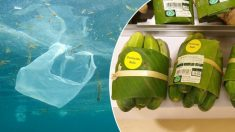 L'expérience d'un supermarché thaïlandais avec des feuilles de bananier pour remplacer les emballages en plastique