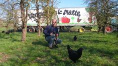 La poule noire de Janzé, qui décapite les frelons asiatiques : un remède miracle contre la terrible invasion?