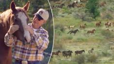 Wild, Wild West : le gouvernement américain offre 1000$ en échange de l'adoption et l'hébergement d'un cheval sauvage