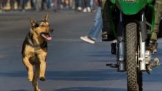 Un motocycliste ivre et un chien s'affrontent pendant 30 minutes