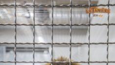 Des singes de laboratoire sauvés par le parc animalier-refuge  de La Tanière