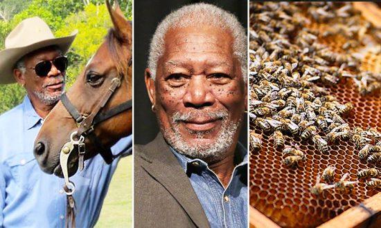 Morgan Freeman transforme son ranch de plus de 50 hectares en un «sanctuaire pour abeilles» afin de sauver l'espèce