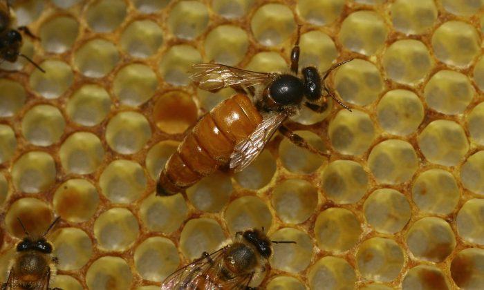 Un médecin examine l'œil d'une femme et découvre que des abeilles se nourrissent de ses larmes